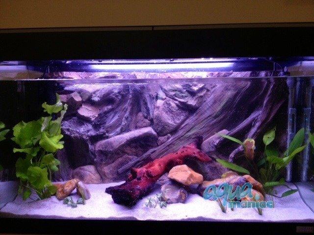 aquarium background for juwel vision 260 aquarium 3d. Black Bedroom Furniture Sets. Home Design Ideas