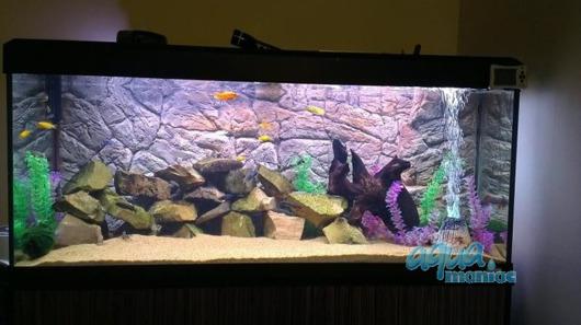 3D thin rock background 146x54cm