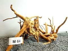2x Red Moore roots 40x30