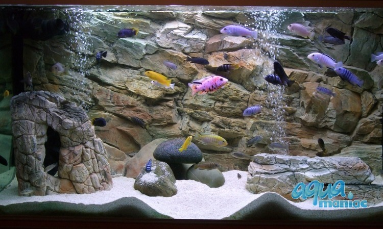 Fluval Roma 125 rock background 77x42cm 1 section