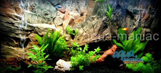 Fluval Roma 90 basic background 58x40cm 1 section