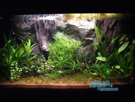 Fluval Roma 90 root background 58x40cm 1 section