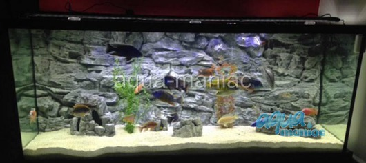 JUWEL RIO 450 3D grey rock background 148x56cm in 3 sections