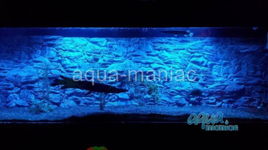 JUWEL Vision 260 3D thin rock background 117x54cm in 2 sections