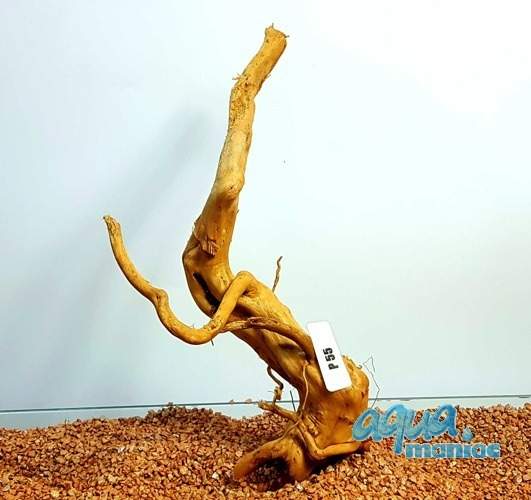 Red Moore Root size 37x15cm