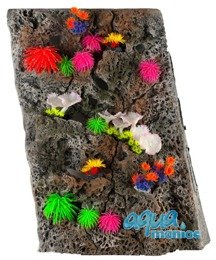 Module Limestone Background 50x50cm with corals
