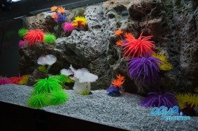 Modules of Limestone Background with corals to fit 100x60cm aquarium